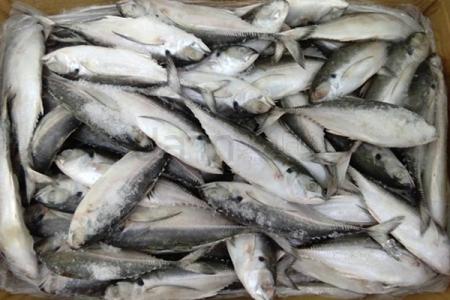 ปลาหางแข็ง 8-10(10KG) (Pla2)