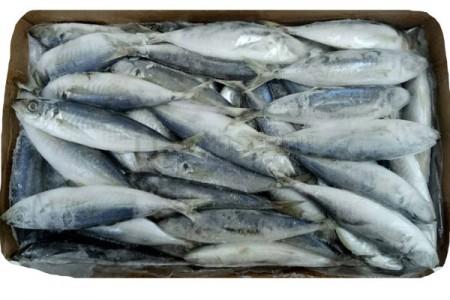 ปลาแขก 8-10 (10KG)