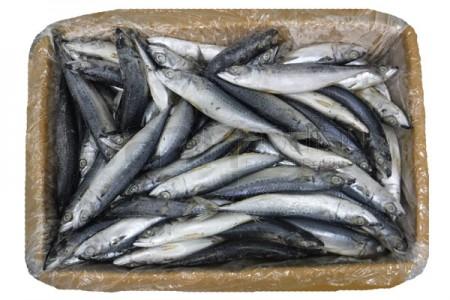 ปลาซาบะญี่ปุ่น 80-100(10KG)