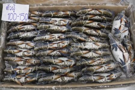 ปูม้า 100-150(4KG) Dr.Crab (ตัวผู้)