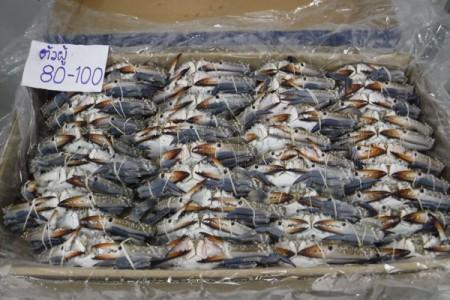 ปูม้า 80-100(4KG) Dr.Crab (ตัวผู้)