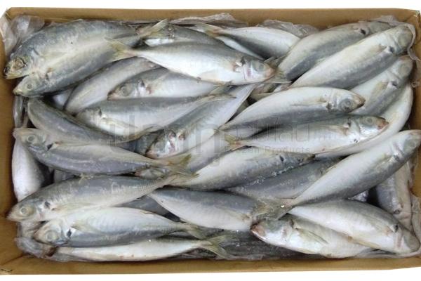 ปลาแขก 8-10(10KG) (น้ำตาล/ลายน้ำเงิน)